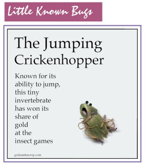 Little Known Bugs: The Jumping Crickenhopper